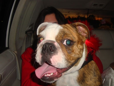NJ missing bulldog