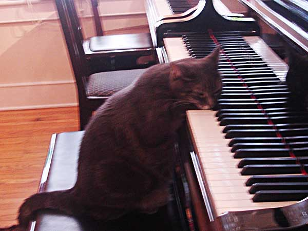 Nora the Piano Cat rests on the keyboard after playing a solo in 2007. (Photo: Vance Lehmkuhl / Staff)