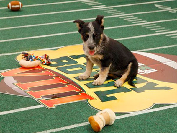 "Pennsylvania SPCA pups didn´t make the cut for this year´s ""Puppy Bowl,"" but you can catch them live on TV this week as they make their New York City tour promoting the blockbuster event."