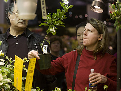 For some, browsing the Philadelphia Flower Show´s vendor stalls is as exciting as looking at the exhibits. (Ed Hille/Staff Photographer)