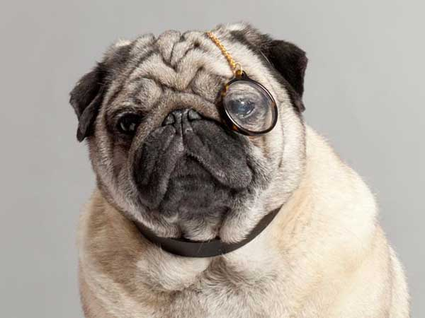 Eyewear company Warby Parker announced Warby Barker, a line for dogs, on April Fools´ Day last year.