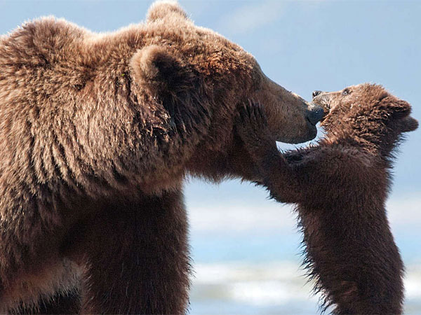 "Mama bear Sky snuggles with her cub Scout in Disneynature´s ""Bears."" (Adam Chapman/Disney)"