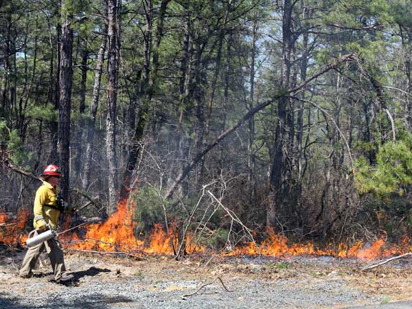 A back burning effort was used to control a forest fire at the end of Livingston Avenue No in Bayville, NJ, which borders Beachwood, Thursday April 24, 2014. (AP Photo/The Asbury Park Press, Tanya Breen)