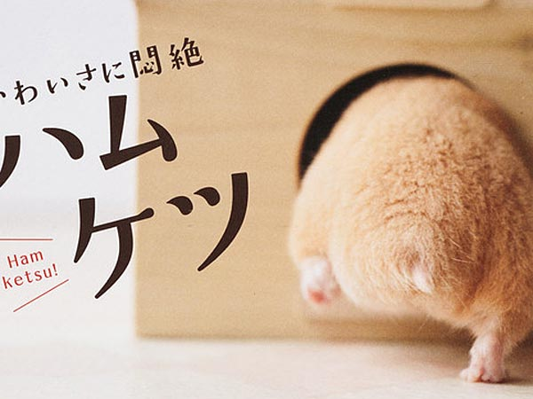 The cover of a recent book featuring hamsters' posteriors. (Sekai Bunka Publishing Inc.)<br />