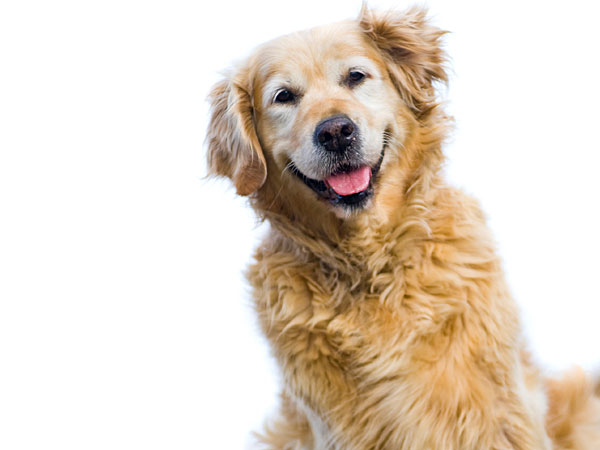 A senior dog has different health requirements than a younger dog. Here are some tips to help you keep your senior pet healthy. (iStock)