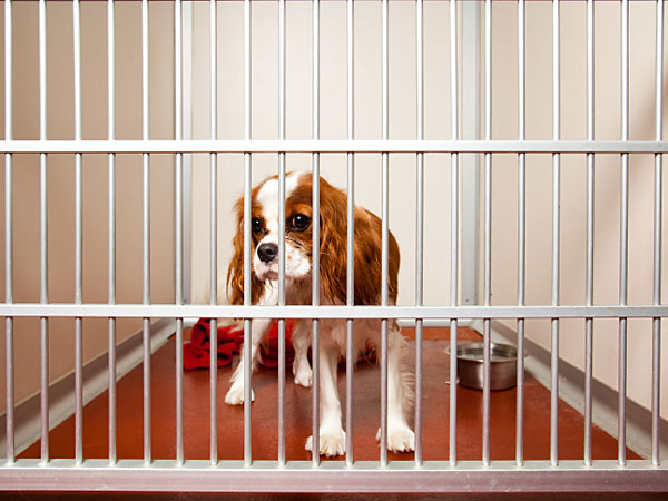 Despite any negative stereotypes animal shelters may have, they actually provide a ton of healthy, happy pet options for your family to take home and love. (iStock)