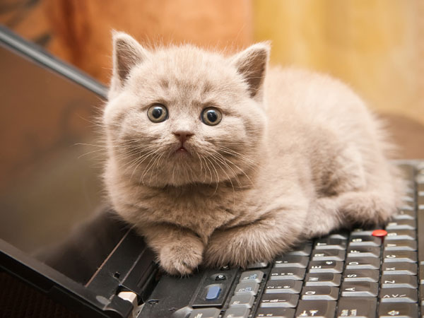 Tech device warranty supplier SquareTrade said it commissioned a survey because it is seeing frequent repairs and replacements from pet-related damage for increasingly popular gadgets. (istock photo)