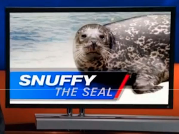 Snuffy the Seal briefly stars in a Shark Week promo video.