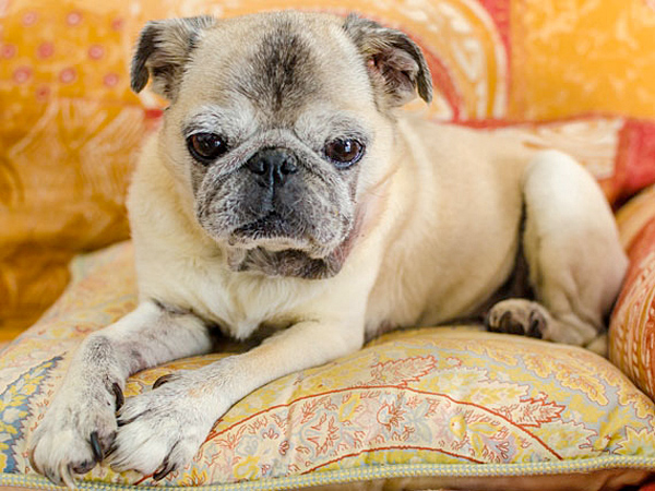 One of the most difficult aspects of pet ownership is considering their mortality. (iStock)