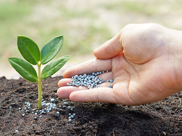 Nitrogen is one of the most important nutrients for plants, necessary for their production of proteins, amino acids and DNA. (iStock)
