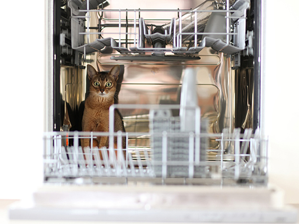 Open refrigerators, dishwashers, microwaves, ovens, washers, dryers should be checked for inquisitive kittens before being shut and turned on. (iStock)