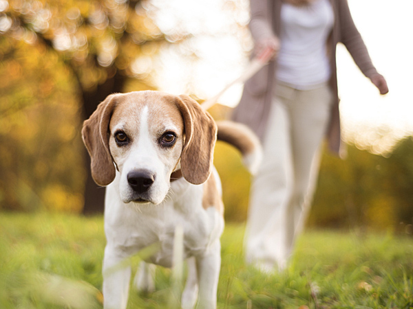 Bailey Schroeder, founder of a new pet-centric app called ResQwalk, is setting out to make animal rescue a simple part of people's everyday lives. (iStock)