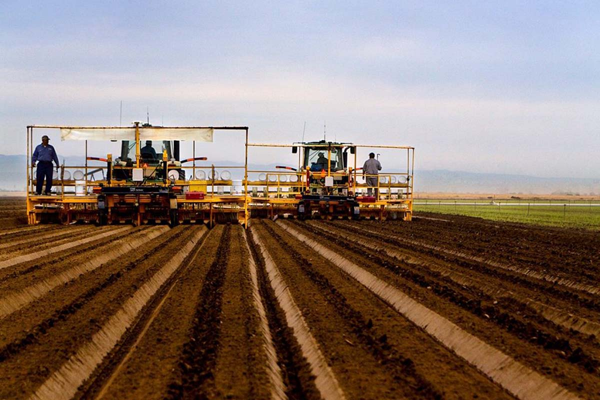 Tandem planters work their way through a Bolthouse Farms carrot field.