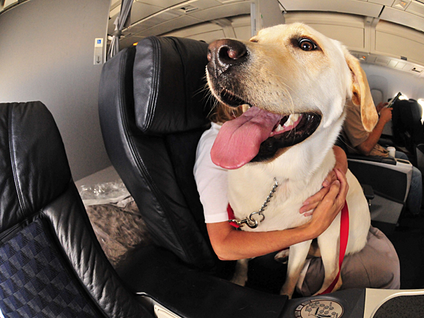 With the season for vacations fast approaching, it's time to consider whether you will be traveling with your dog or whether you will be leaving her behind. (iStock)
