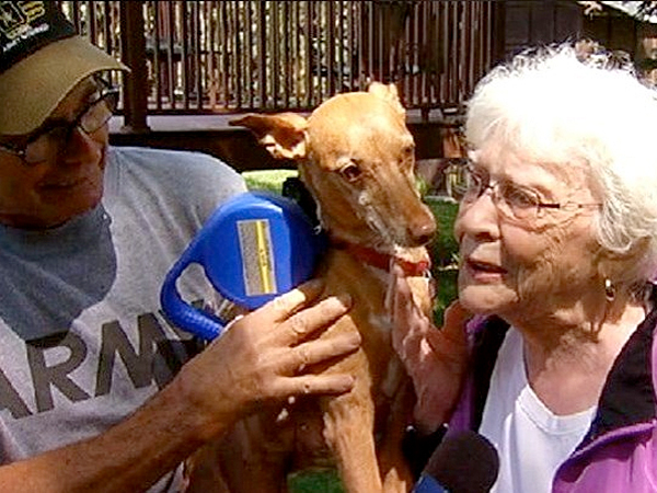 When people are confronted by a wild pack of coyotes, they run or hide or cower with fear. But an 84-year-old woman who lives in Bensenville, just outside of Chicago, risked her life to save a dog from a vicious attack.