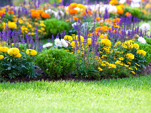 Make an eye-catching garden more enjoyable by including fragrant plants. (iStock)