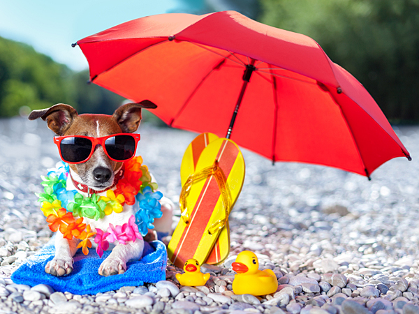 Providing shade for your dog will keep him cool and content - and snapping a shot of him lounging underneath a beach umbrella can also make for a share-worthy photo. (iStock)