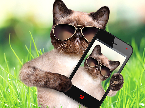 Instagram, Facebook, Pinterest and Flickr are all filled to the brim with adorable images of furry felines. (iStock)
