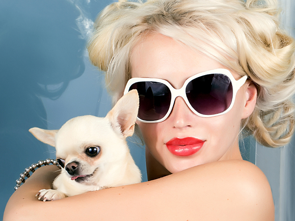 In the era of designer babies and pink poodles, doggie liposuction doesn't sound quite so far-fetched. (iStock)