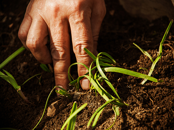 If your garden plants are flopping instead of flourishing, the problem could well be your soil. (iStock)