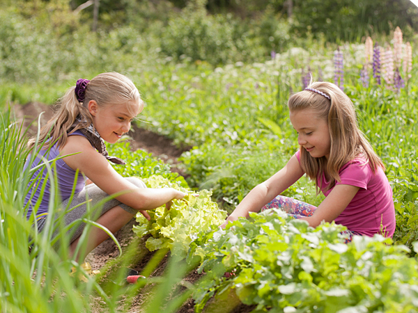A little basic knowledge of the wild plants in your area could yield a delicious salad. (iStock)