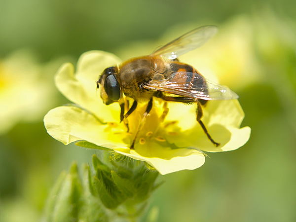 Bees are an amazingly diverse insect species, comprising some 20,000 different varieties. (iStock)
