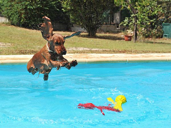 How Do I Get My Dog To Swim