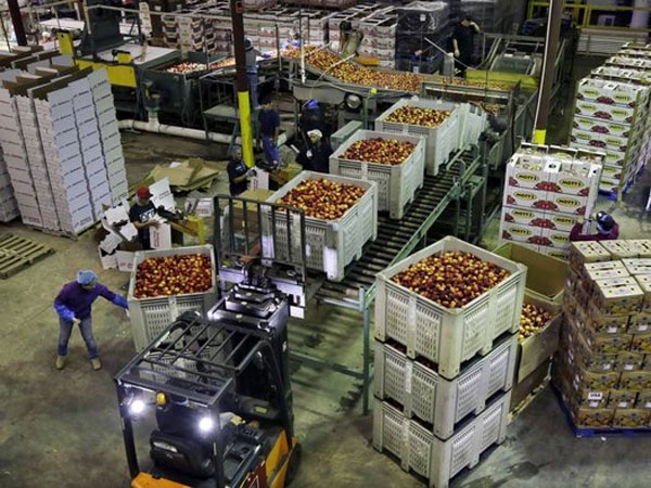 FILE - In this Tuesday, Aug. 27, 2013, file photo, workers load large containers of nectarines for sorting at Eastern ProPak Farmers Cooperative in Glassboro, N.J. The Commerce Department reports on wholesale prices for August on Friday, Sept 27, 2013. (AP Photo/Mel Evans, file)