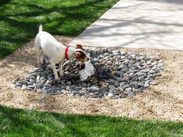8 backyard ideas to delight your dog for Garden designs for dogs
