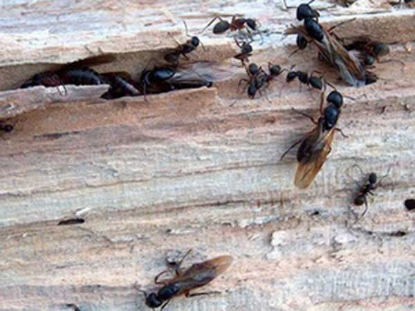 Ants are one of the biggest fall pests. (File photo)