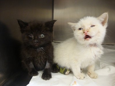 Karma, at left, and Nirvana, at right, were saved from allegedly becoming one Chester man´s dinner last night, police said.