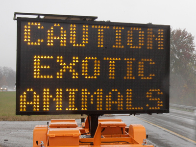 Ohio is one among 7 select states with very relaxed laws on owning exotic animals. (AP photo/Tony Dejak)