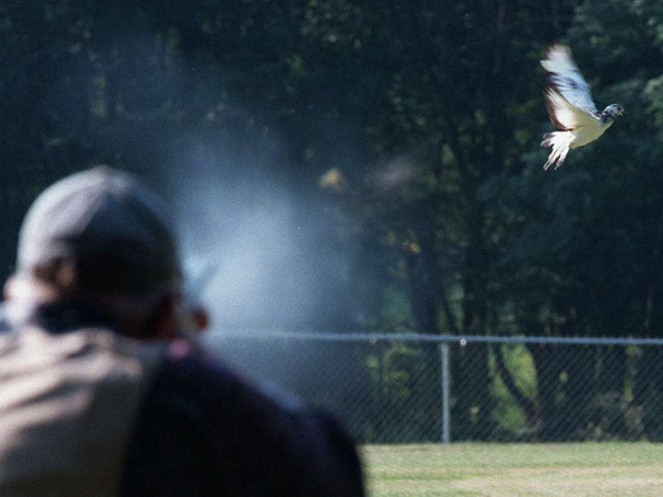 A pigeon shoot participant fires at a bird in Schuylkill County. (FILE)