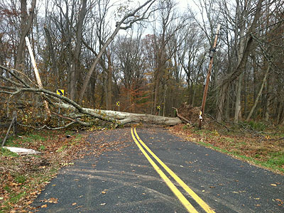 An oak tree blocks Greenhill Road in Lumberville, Solebury Township, toppled Monday by Sandy. Volunteers will help clear trees and other debris this weekend. (Bill Reed/Staff)