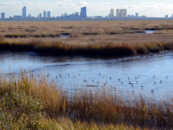 The view of the Atlantic City skyline from Wildlife Drive, a popular eight-mile stretch of road for birdwatchers through the Edwin B. Forsythe National Wildlife Refuge.  (TOM GRALISH / Staff Photographer)