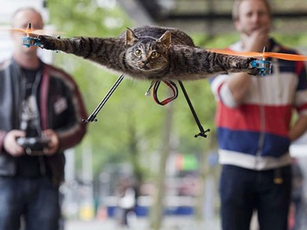 Orville the Flying Cat