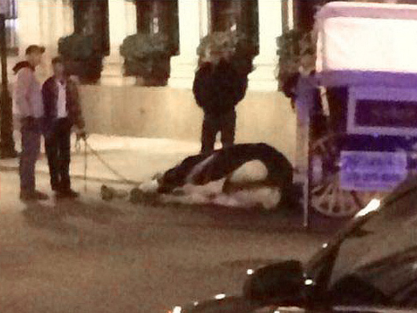 A Twitter photo showing the horse lying on the street in Philadelphia. Police had its handler ensure the horse stayed down until animal-care-and-control officials could be summoned. Eventually, the horse was raised to its feet by straps connected to a tractor, said Linda Kramer, a stable manager.