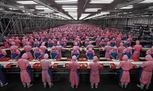 """Manufactured Landscape"" looks at industrialization in China, as in this scene of a chicken processing plant ."
