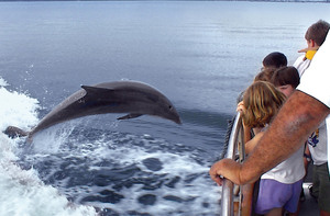 Sightseeing cruises and tours will have you clicking at dolphins and other wildlife.