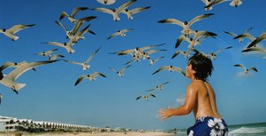 Seagulls scatter on St. George Island beach, which is lined with cottages. Birders can spot a variety of migrating birds in fall and spring.
