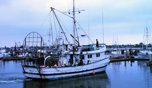 First canned in 1903, tuna quickly became the best-selling seafood in the country. Above, a tuna boat docks.