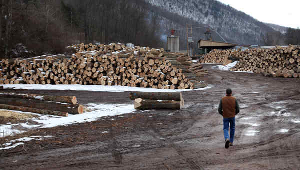 Marc Lewis walks among logs his company will use.