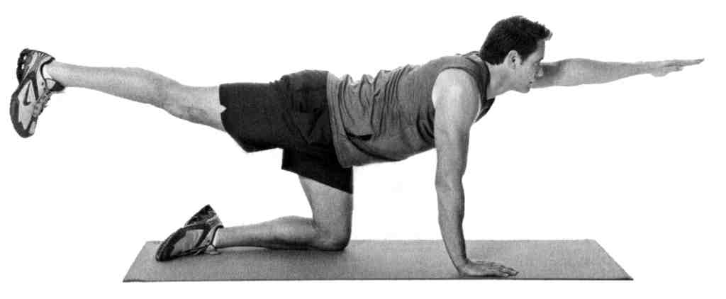 The bird dog , above, is a yoga staple, inspired by a pointer. The glute bridge, below, strengthens buttocks, part of the core. Two to three sessions of core work a week should be sufficient for most folks, says Nick DiNubile.