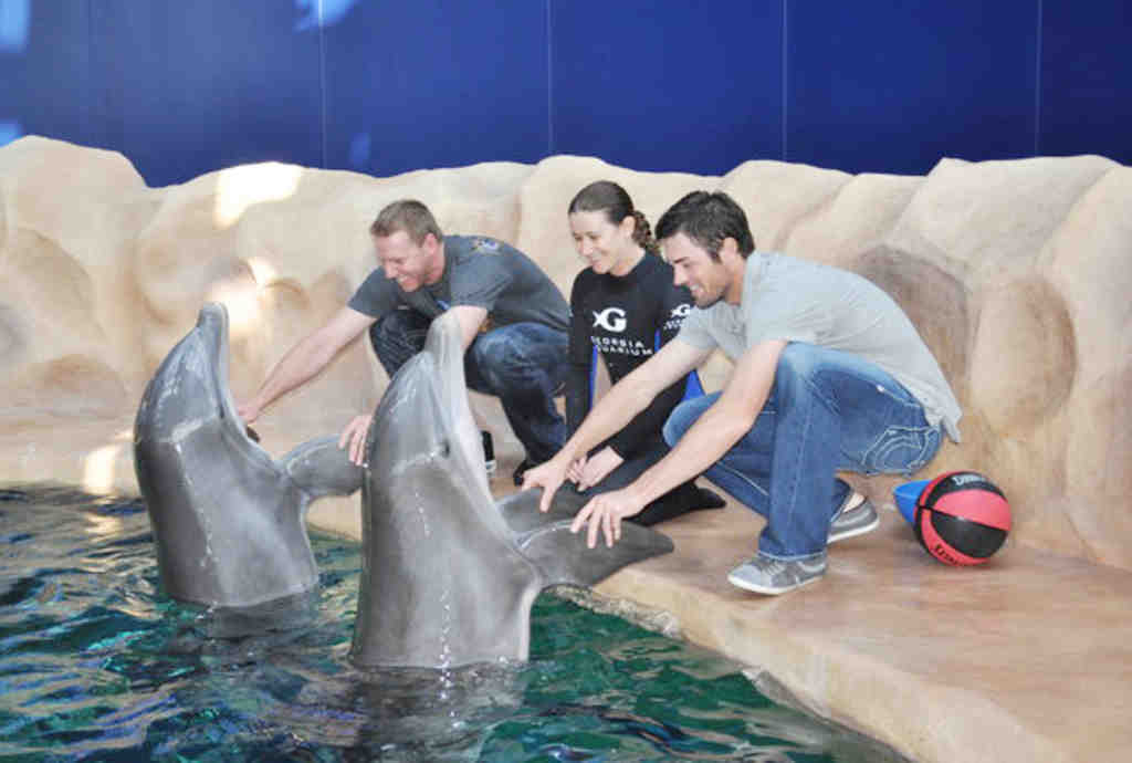 Roy Halladay (from left), Lisa Mignogna and Cole Hamels play with dolphins at the Georgia Aquarium.
