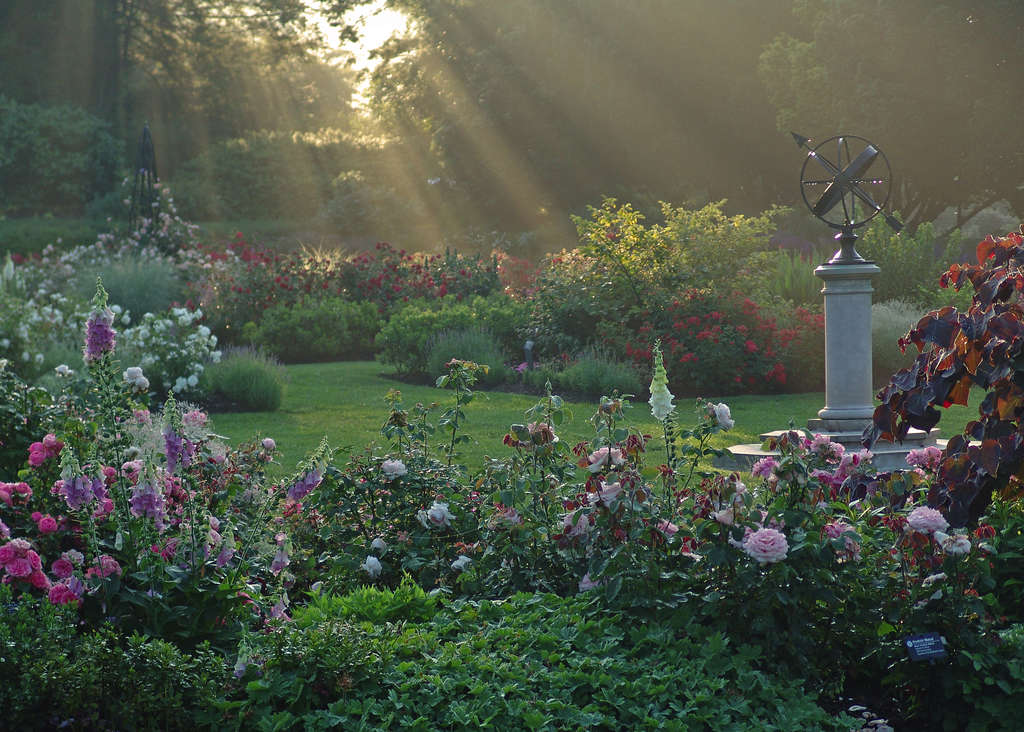 """A worthy cover photograph: The Rose Garden at sunrise, rays of light kissing the flowers, graces the front of the book """"Morris Arboretum of the University of Pennsylvania: Through the Lens of Paul W. Meyer."""" Above, Rosa ´Livin´ Easy´; Meyer helping at the plant sale, a spring fund-raiser."""