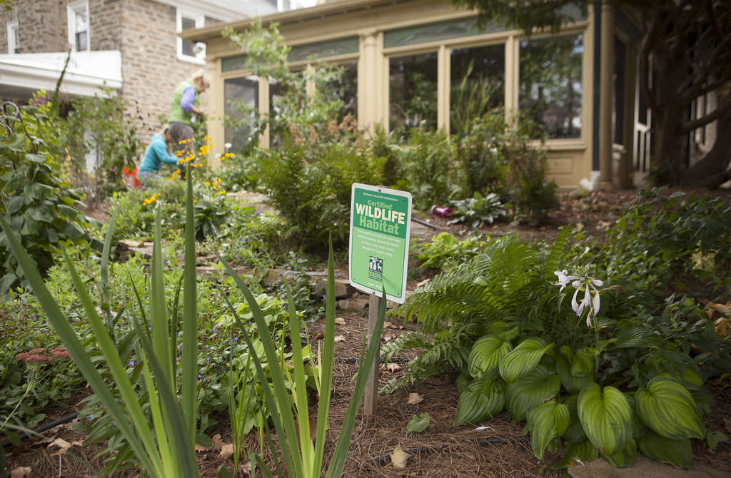 "A sign that reads ""Certified Wildlife Habitat"" sits among the plants in the front garden. Smith´s goals: ""I need plants that are tough, good for birds, butterflies, bees, and other critters, ornamental (of course), and minimum maintenance."""