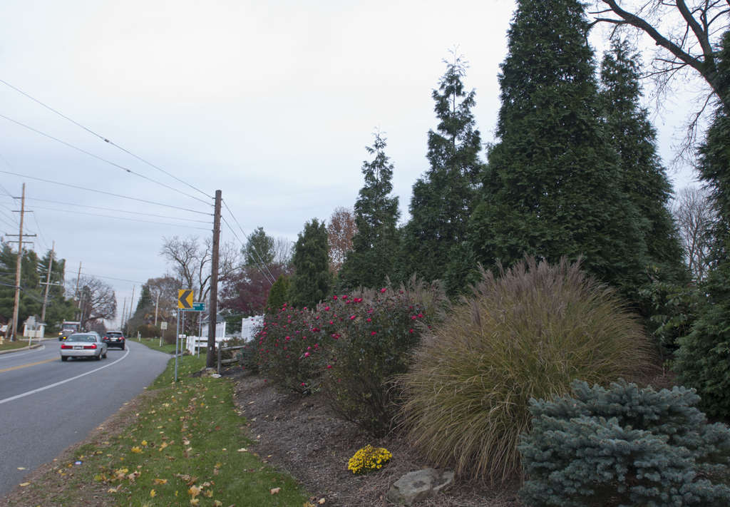 A berm with evergreens, grasses, and roses blocks out the sight of traffic from the Hosier home.