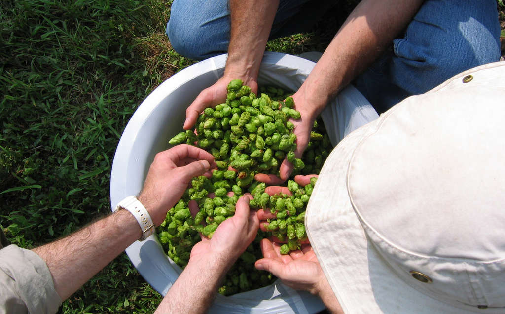 Beers made with a heaping helping of hops are all the rage this year from breweries including Yards, Victory and Sierra Nevada.