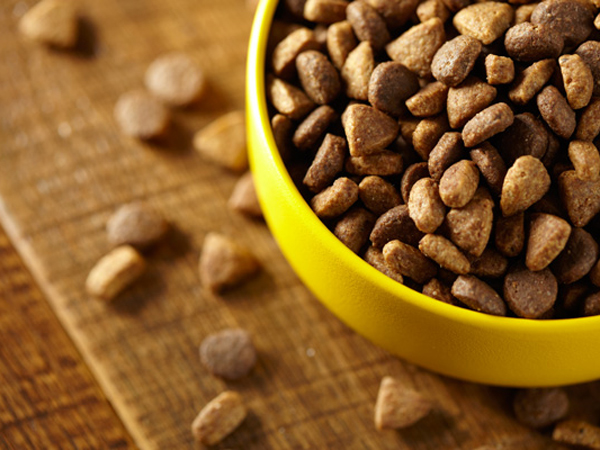 Purina Beyond Cat Food >> Nestle Purina recalls ONE beyOnd dog food - Philly