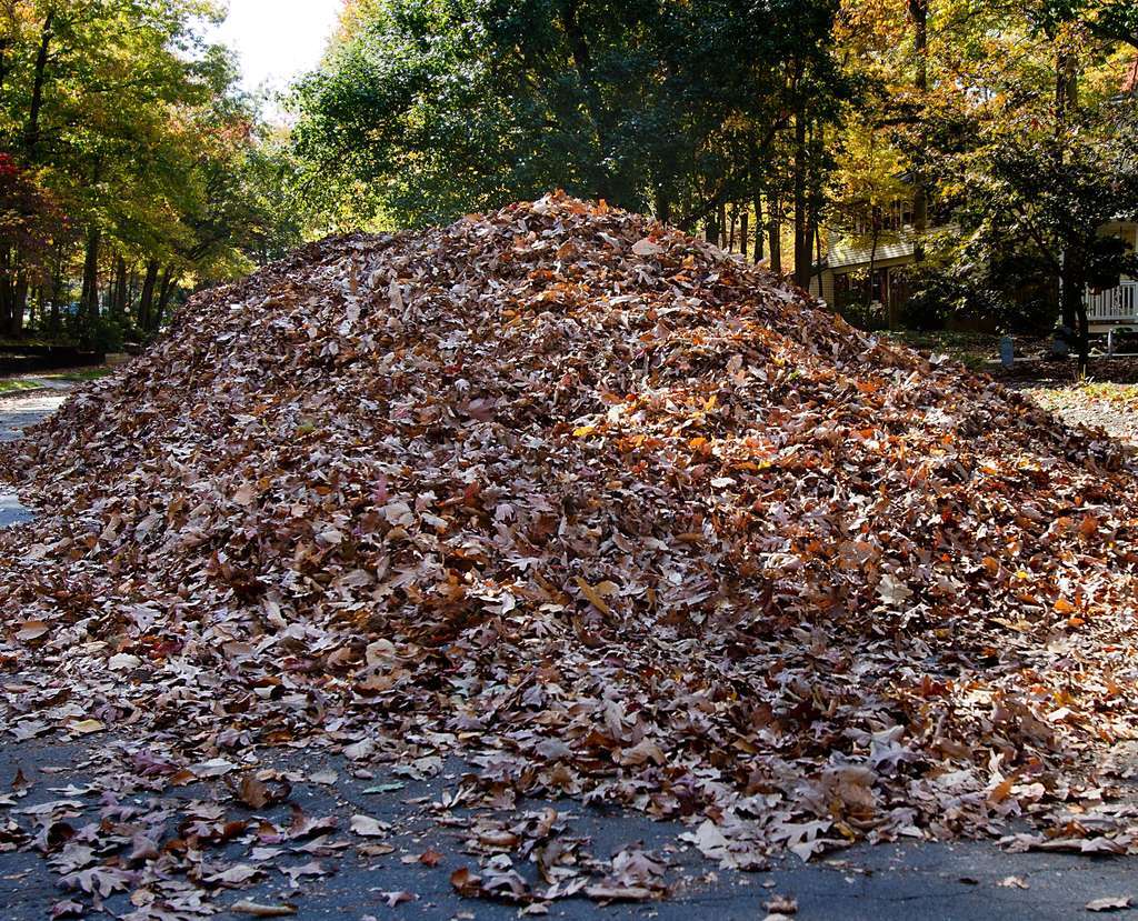 Raking the autumn leaves saves money. Finishing the job? Let´s talk about that that one later.